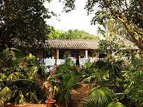 绿荫中的农家小院
