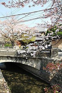 樱花树下的石桥