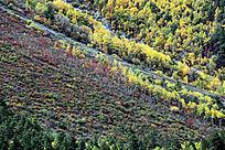 森林树木植被