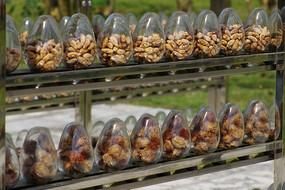 果实种子和果核种子实物展示
