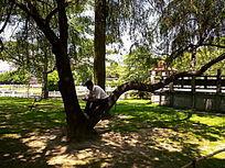 厦门大学的校园草地