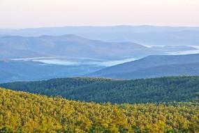 云雾飘渺的大森林