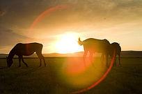 草原上的骏马