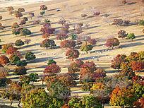 枫林灿烂的秋