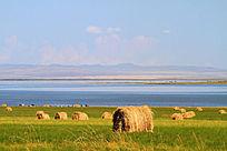 湖畔牧场风景
