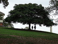 户外度假榕树