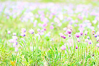 清新淡雅的山花