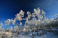 雪景森林梨花开