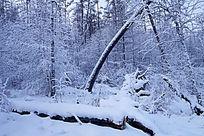 原始林雪景