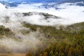 云雾迷漫大森林