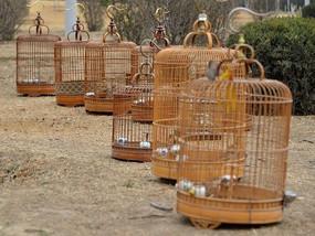地上摆放的一排鸟笼子