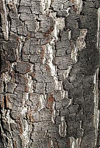 老树树干纹理