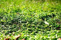 绿草地高清大图