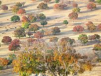 五彩枫树林