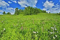 丰茂植被的原野
