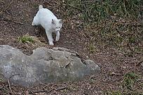 公园里一只白色的猫