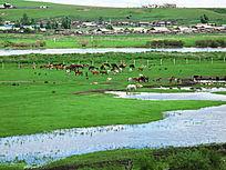 牧场湿地马群