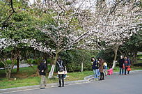 在樱花树下