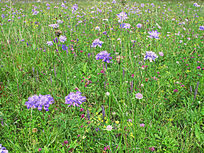 草原植被风光