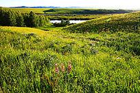草原植被风景