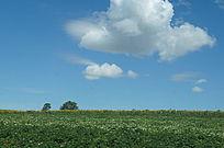 绿草蓝天白云