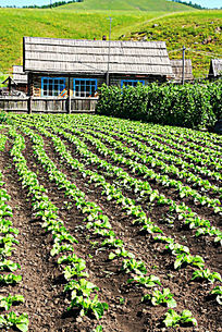农家菜地风景