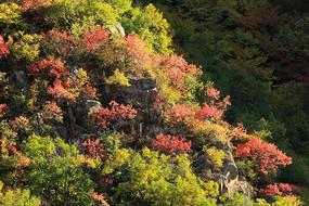 山谷丛林红叶