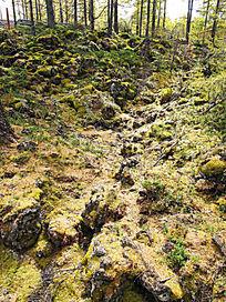 阿尔山熔岩隧道植被