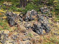 火山岩和森林植被