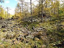 熔岩台地上森林植被