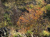 熔岩台地植被