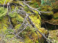 山岩上的苔藓植被