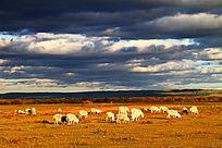 天空阴郁的牧场羊群