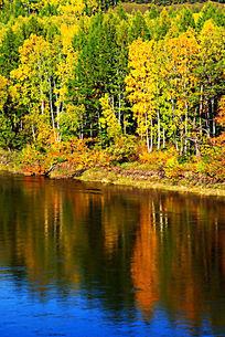 森林河秋景