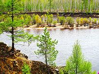 春季森林河