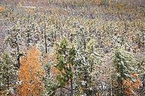 大兴安岭原始森林秋之雪韵