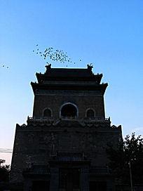 暮色钟楼鸽子飞翔