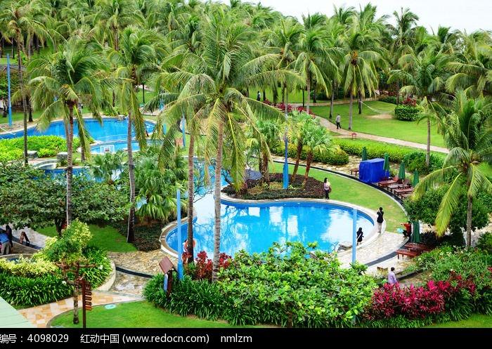 椰子树丛林中的游泳池图片