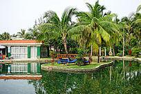 椰子树游泳池