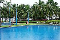 游泳池和椰子树