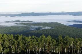 云雾大森林