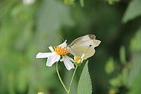 白花上漂亮的蝴蝶