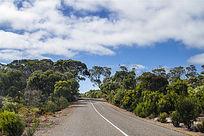 袋鼠岛公路风景