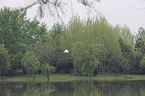 飞翔的白色小鸟