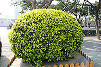 街景摆设盆栽树