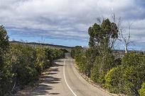 美丽的袋鼠岛热带雨林公路