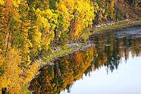 森林河秋色