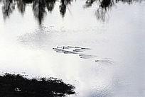 森林河水鸟