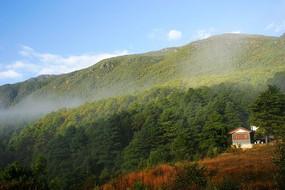 玉龙雪山山林植被