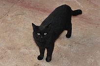 夜色中的可爱神秘黑猫